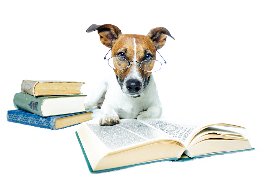 Image Result For Dog Training Classes Reading
